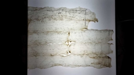 Pawel-Wocial-White-cube-organic-art-sculpture-min