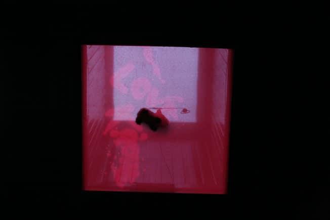 Pawel-Wocial-fenotyp-art-installation